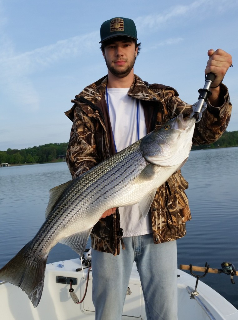 Stripe fishing at Lewis Smith Lake